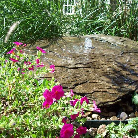 My Garden Tour 098